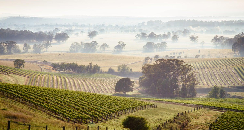Weinberge Australien
