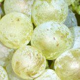 Rebsorte Chenin Blanc