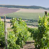 Weinland Bulgarien