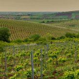Weinland Rumänien