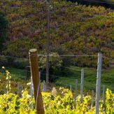 Burgund: Chardonnay und Pinot Noir allerhöchster Güte