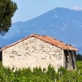 Côtes du Ventoux: leichte und fruchtige Jungweine aus Frankreich