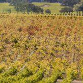 Weinregion Kalifornien