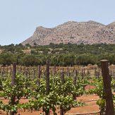 Kreta: griechische Weinvielfalt von der Insel
