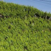 Madeira: Wein mit überdurchschnittlichem Alterungspotenzial