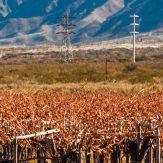 Patagonien: Weinbau im Süden von Argentinien