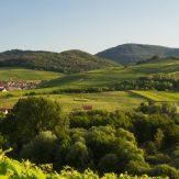 Weinanbauregion Pfalz