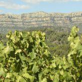 Priorat: hochwertige Rotweine aus Spanien
