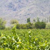 San Juan: einfache Weine aus Argentinien
