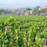 Weinregion Sizilien