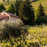 Valpolicella: das Tal der vielen Weinkeller