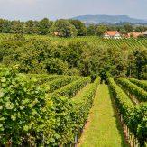 Weinviertel: Kellergassen prägen die österreichische Weinbauregion