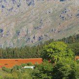 Western Cape: vielfältige Weine aus Südafrika
