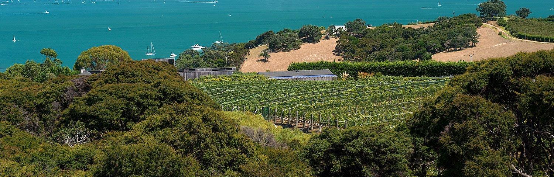 Auckland Wein