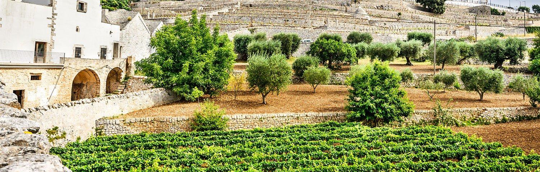 Apulien Weinland Italien