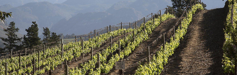 Franschhoek Weinland Südafrika
