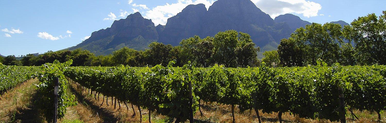 Stellenbosch Weinland Südafrika