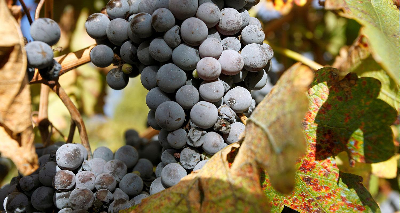 Weinland Argentinien