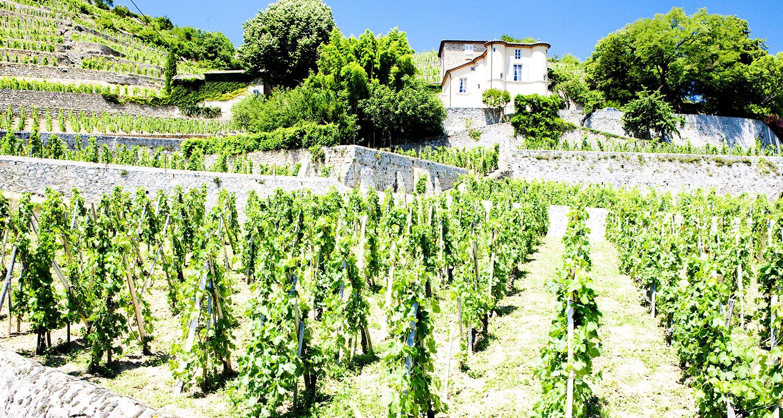 Rhône Chateau Grillet