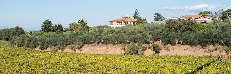 Weinland Italien Latium