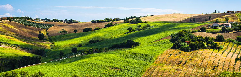 Weinland Italien Marken