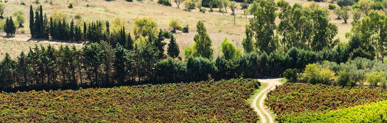 Weinland Italien Sardinien