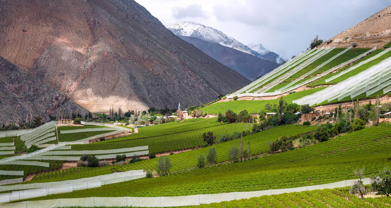 Weinfelder am Fuß eines Berges.