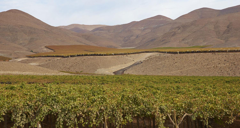 Weinreben grenzen an die Atacama Wüste