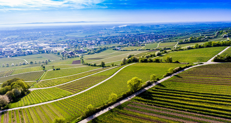 Weinanbaugebiet Rheinhessen. Hier entstehen exzellente Tropfen zum Start in die Weißwein-Saison