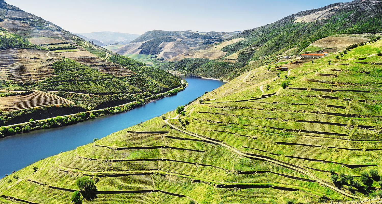 Weinberge im Duoro Tal im Weinland Portugal