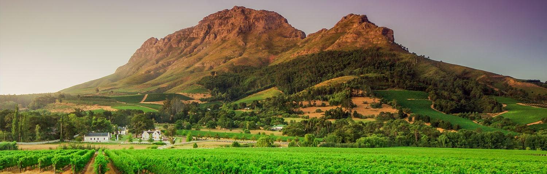 Die Herkunft unseres weißen Traubenhelds: Western Cape in Südafrika.