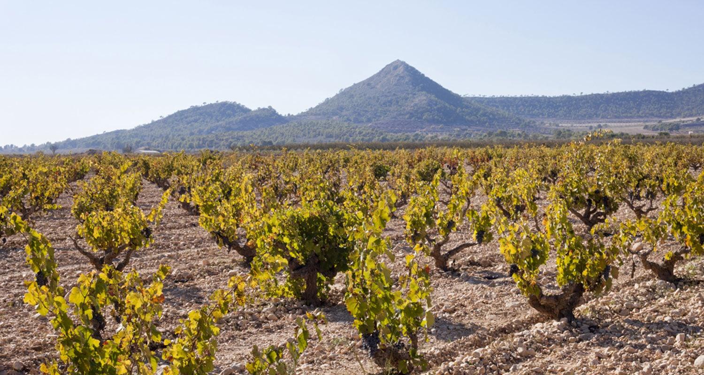 Rafael Cañizares baut auf seinen Weinbergen Tempranillo, Monastrell und Syrah an
