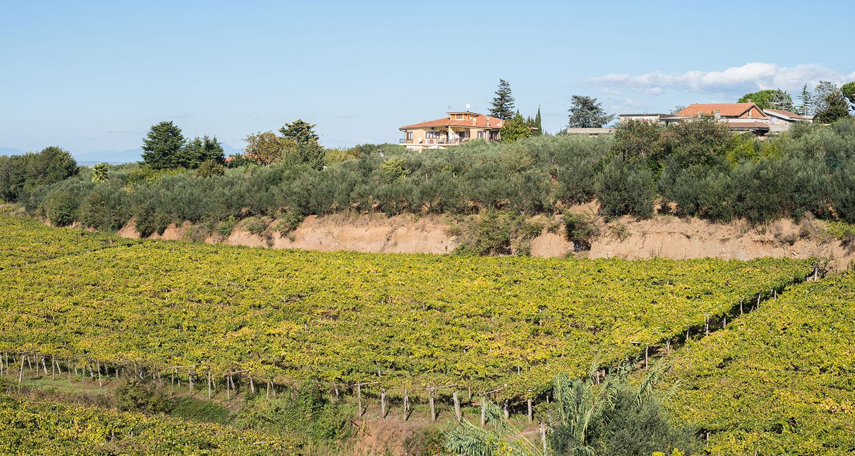 DOC Roma Weingut in der Nähe von Rom