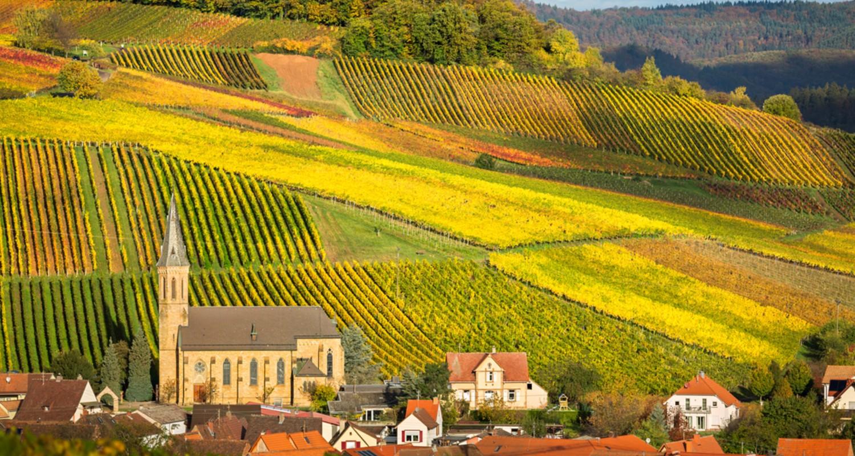 Die Pfalz - Heimat des Grauburgunder