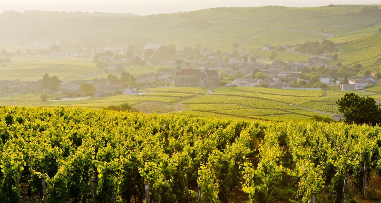 Weinregion Burgund in Frankreich