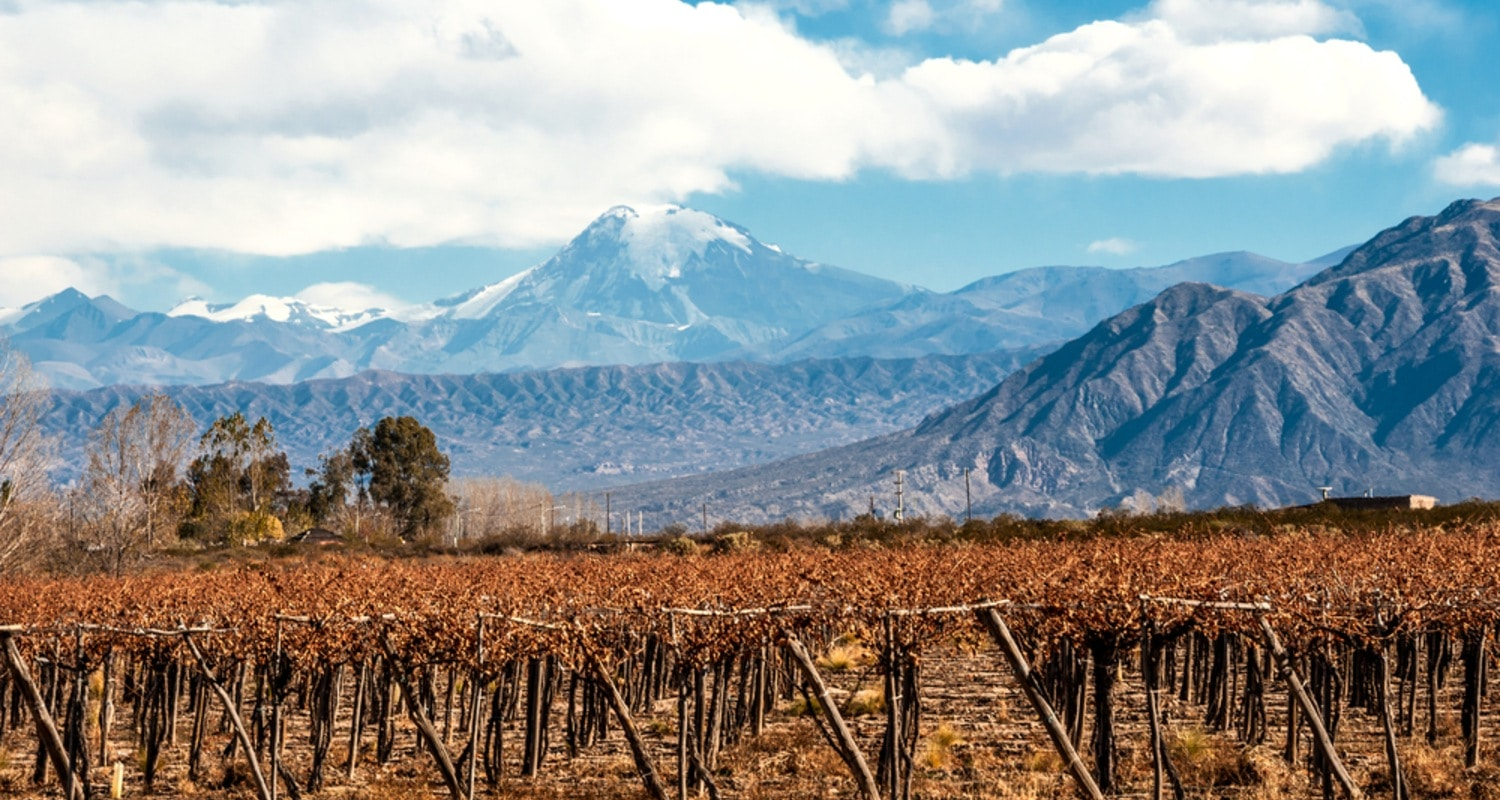 Weinberge in Chile