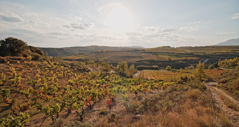 Weinberge Rioja