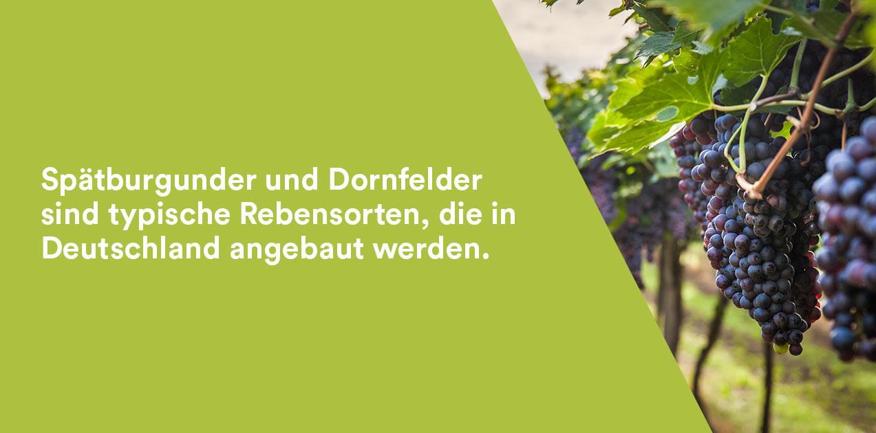 Deutsche Rotwein Rebsorten